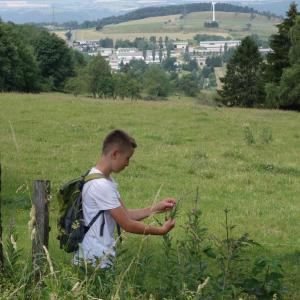 auf den Wiesen um Oberweißbach findet man viele Kräuter
